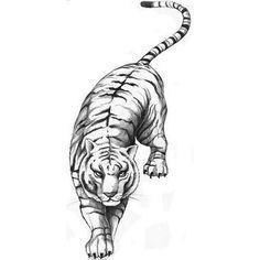 Puma Tattoo Vorlagen Weiß Jemand Wo Es Die Gesuchten Gibt