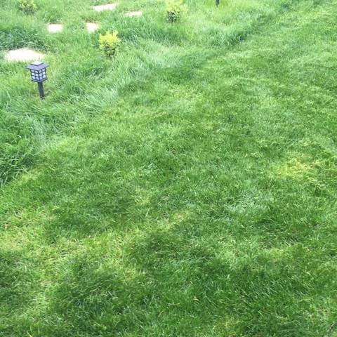 Rasen Im Garten Hat Unterschiedliche Farben Was Kann Ich Tun