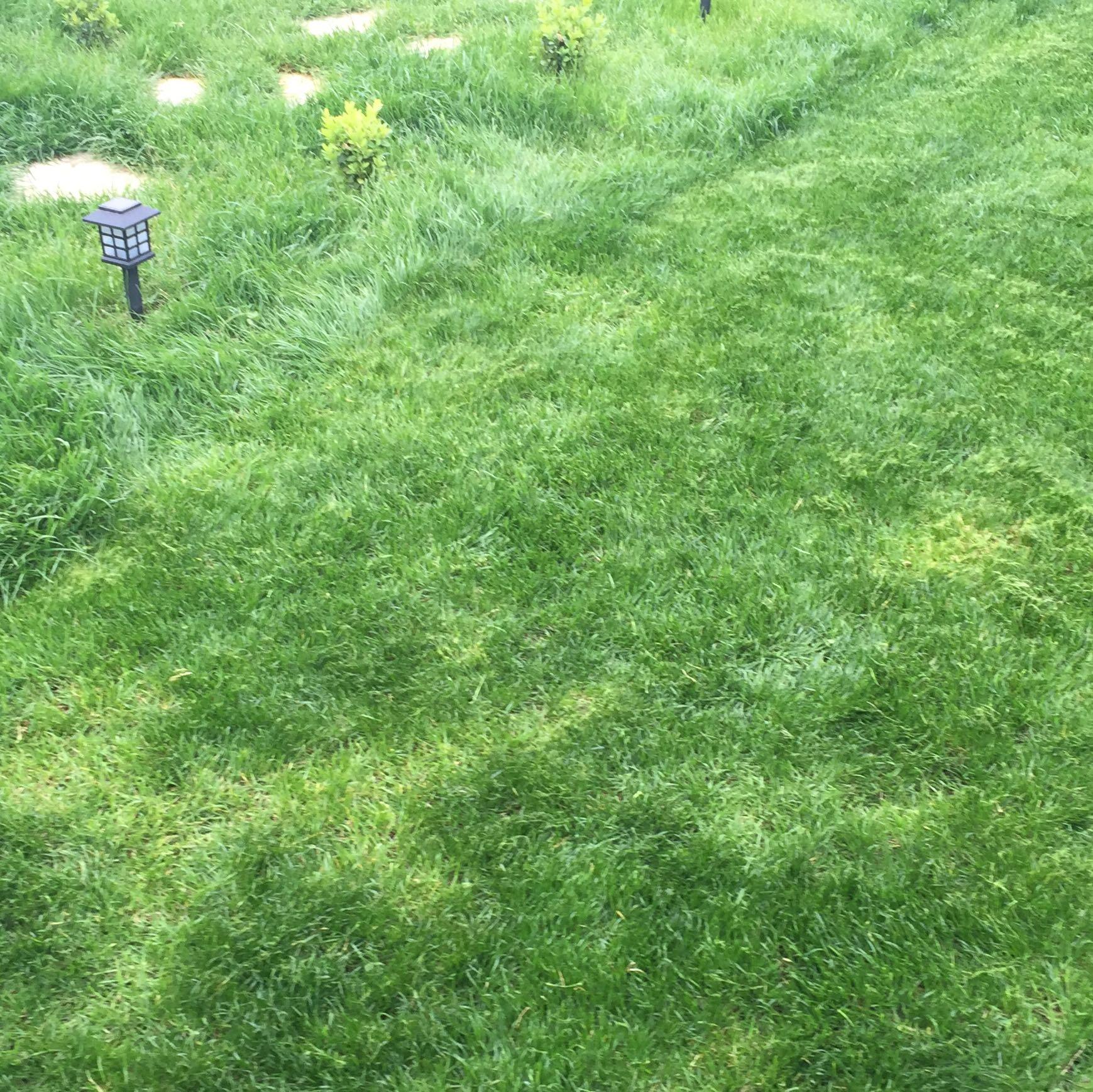 Neu Garten Ohne Rasen Design