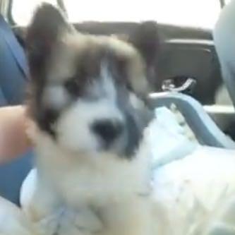 Das erste Bild  - (Hund, Rasse)