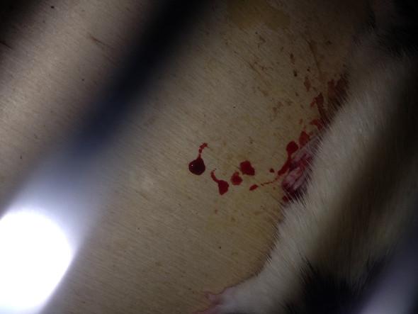 Hier einmal ein Foto vom Fuß - (Ratten)