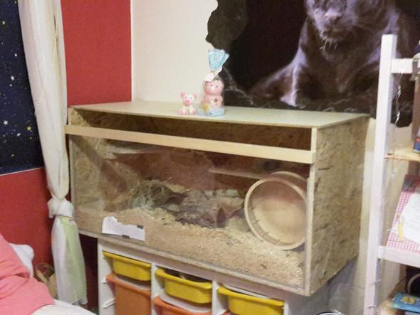 Mäuse in diesem Käfig?