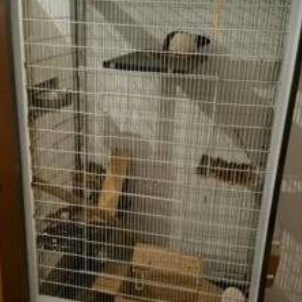 Wie Kann Man Schlafzimmer Einrichten: Rattenkäfig Einrichten Aber Wie? (Ratten, Einrichtung, Käfig