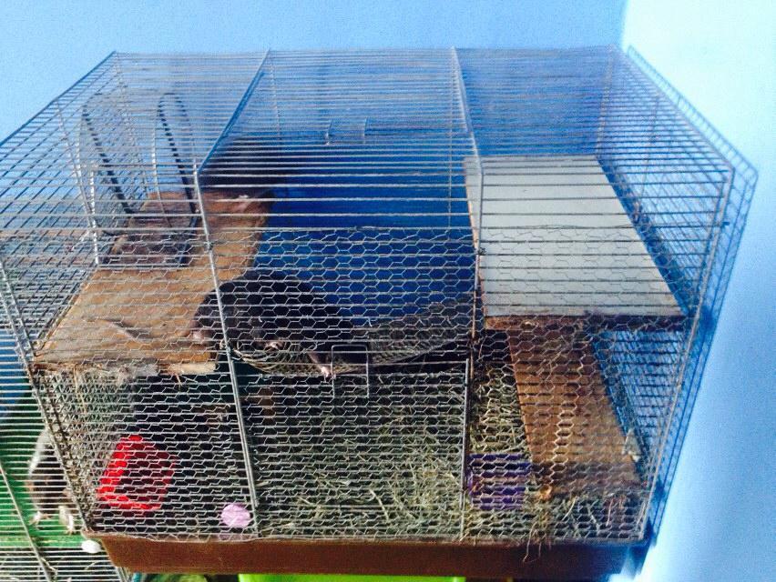 rattenk fig f r 2 ratten zu klein haustiere k fig. Black Bedroom Furniture Sets. Home Design Ideas