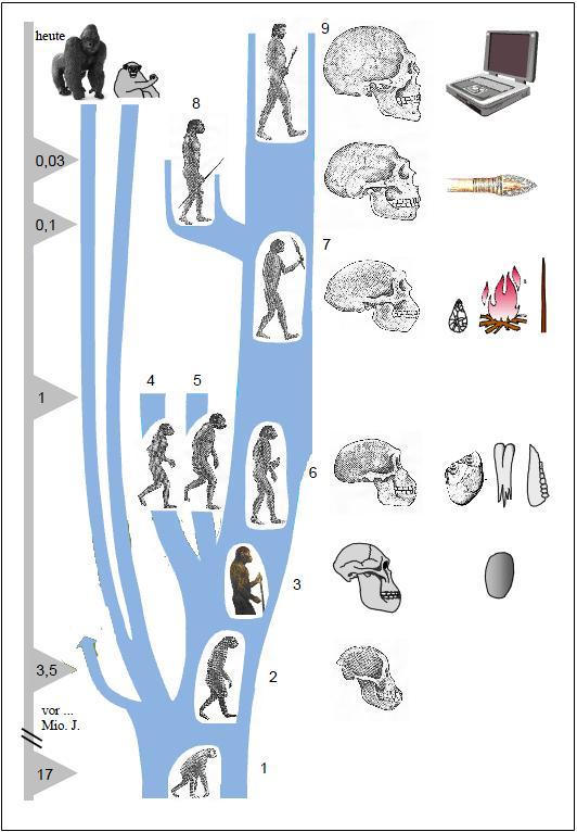 Mensch Evolution