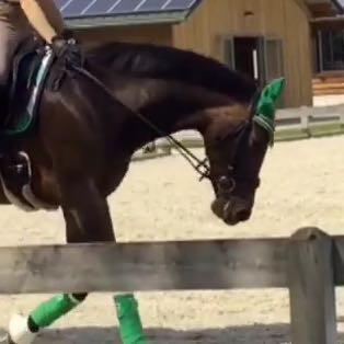 Ungefähr so   - (Pferde, Reiten, Pony)