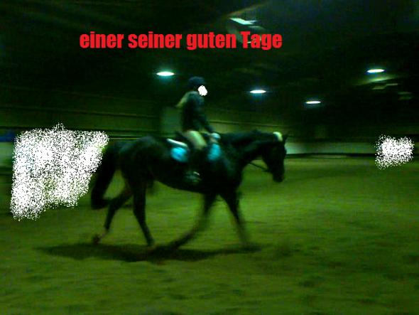 das war das Beste mal - (Training, reiten, junges Pferd)
