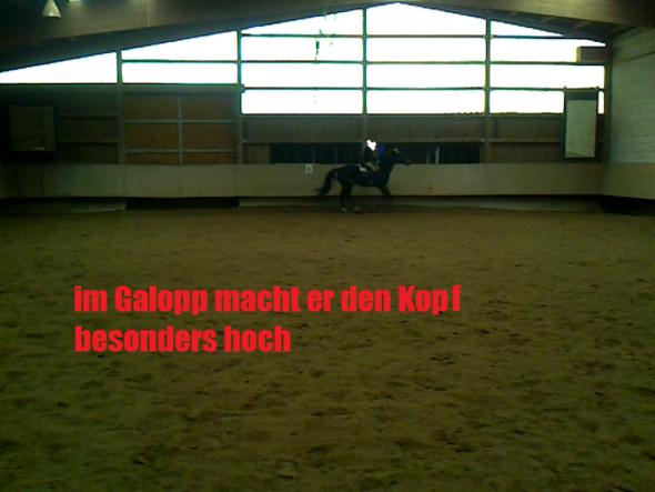 ein sehr schlechtes Mal (im Galopp) - (Training, reiten, junges Pferd)