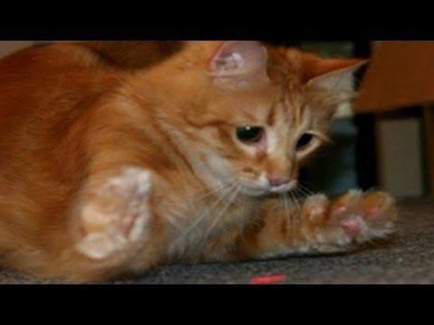 rennen hunde auch einem laser hinterher so wie katzen?