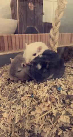 - (Tiere, Haustiere, schlafen)