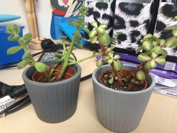 Anderen 2 - (Pflanzen, Gärtner, Dünger)
