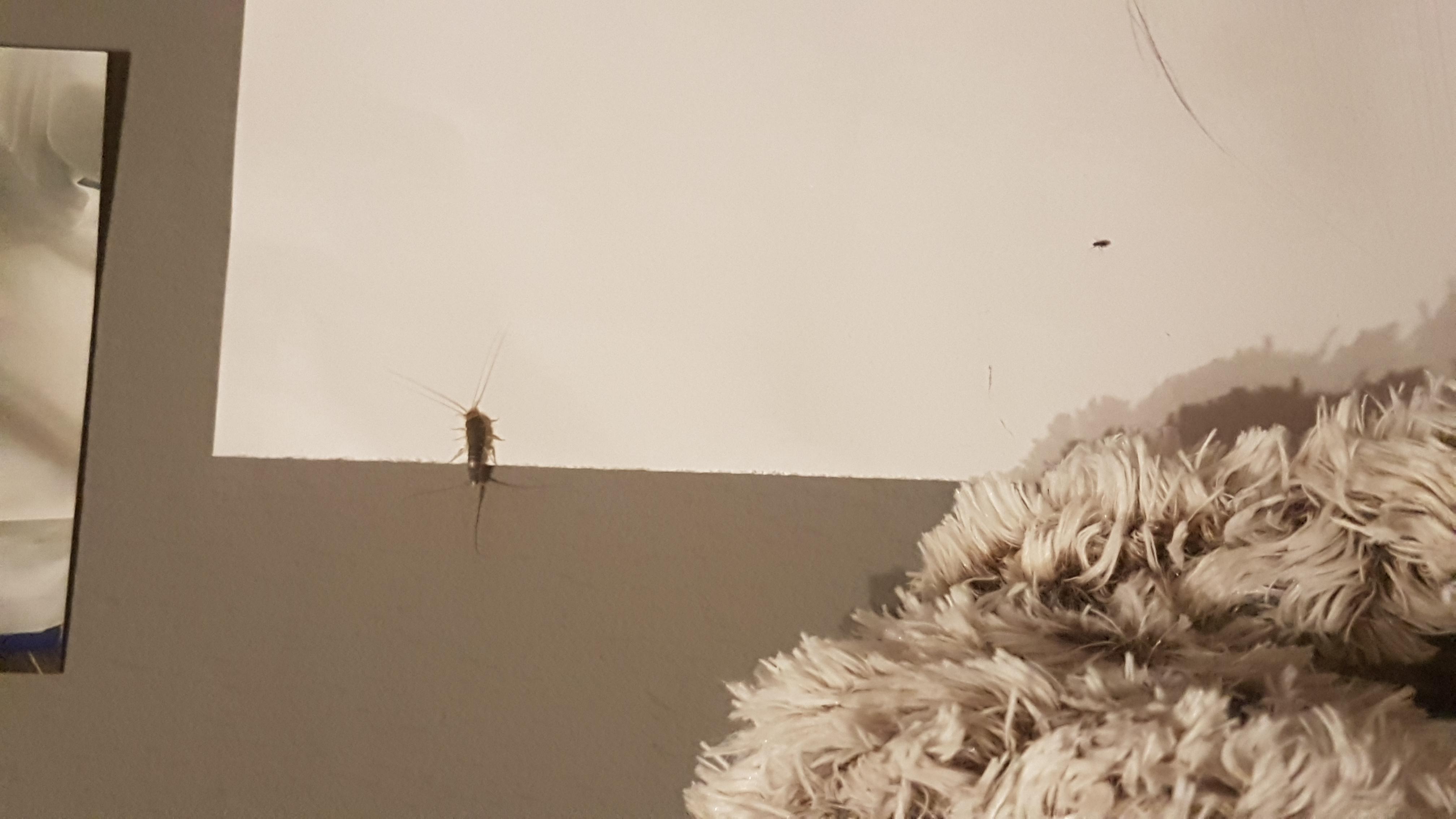 Silberfische schlafzimmer starwars bettw sche sinnvoll - Insekten im zimmer was tun ...