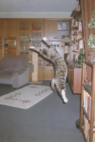 Silvester - (Katze, Haustiere)