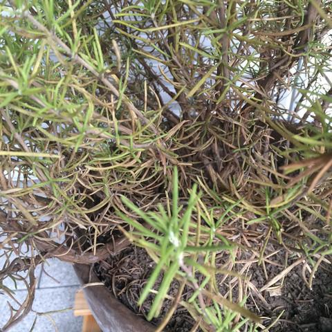 Bild 2 - (Garten, Pflanzen, Sommer)