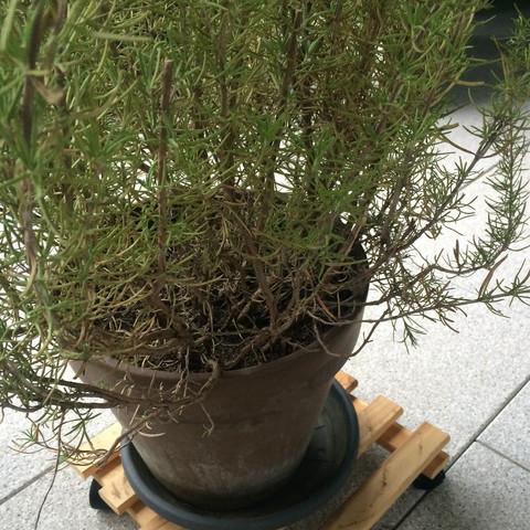 Bild 3 - (Garten, Pflanzen, Sommer)