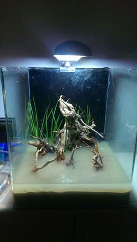 Krabbenbecken - (Aquarium, Aquaristik, krabben)