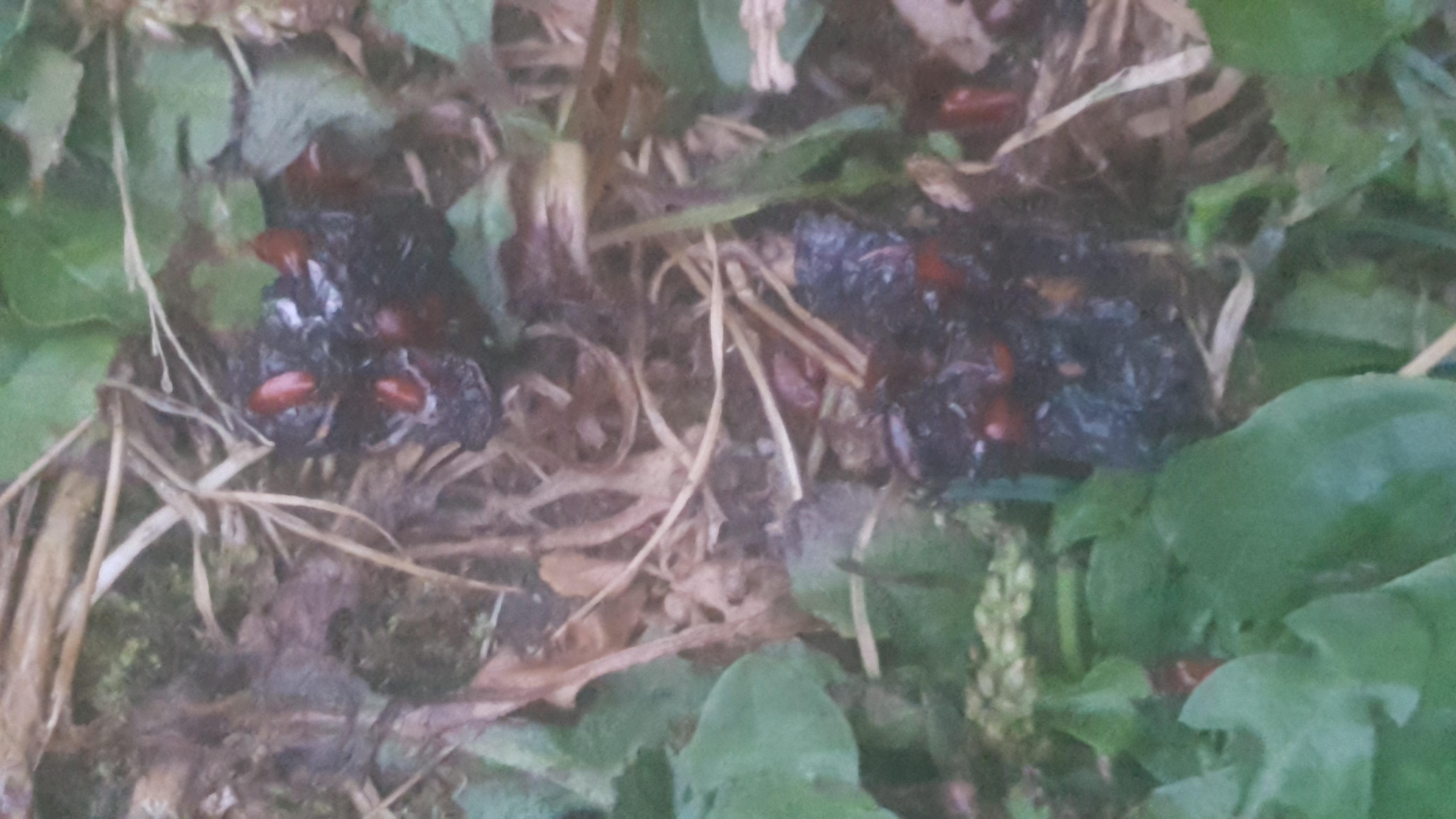 rote punkte im hundekot - wurmeier? (tiere, hund, würmer)