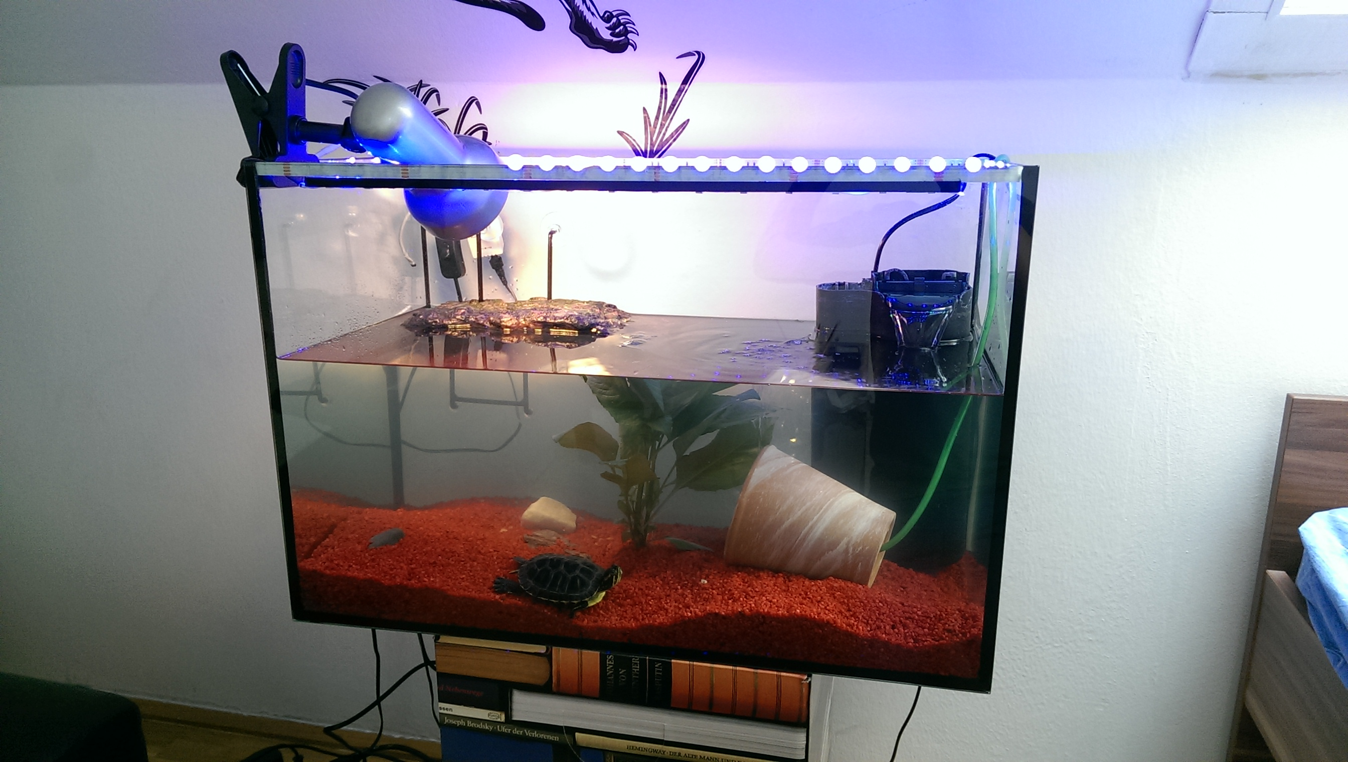 rotwangenschildkr te hilfe aquarium schildkr ten. Black Bedroom Furniture Sets. Home Design Ideas