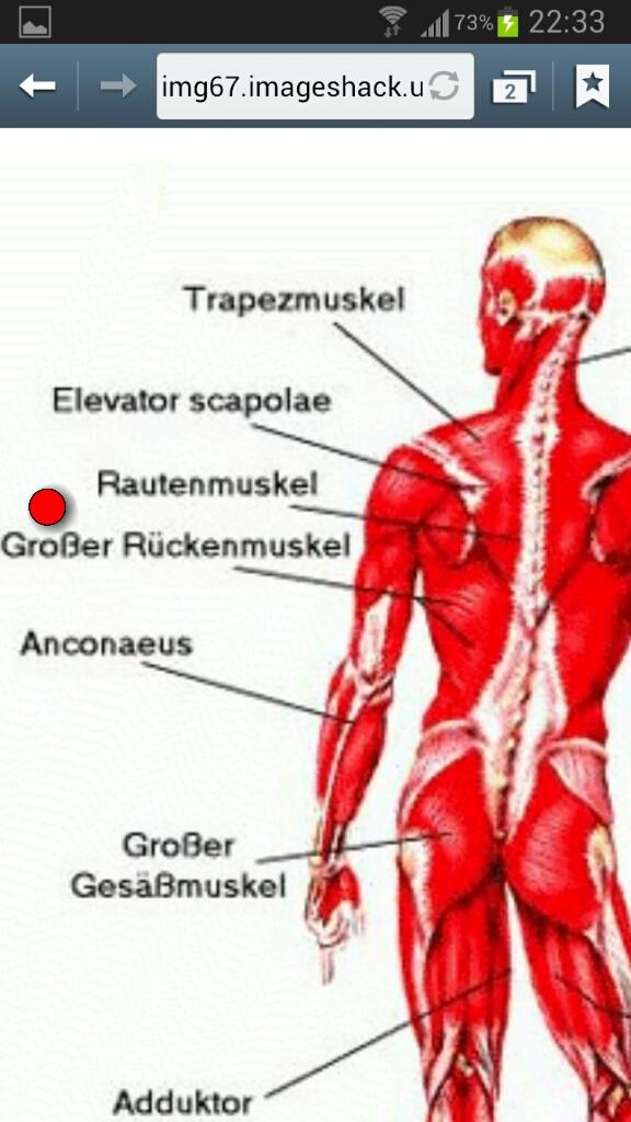 Groß Obere Rückenmuskulatur Anatomie Ideen - Anatomie Ideen ...