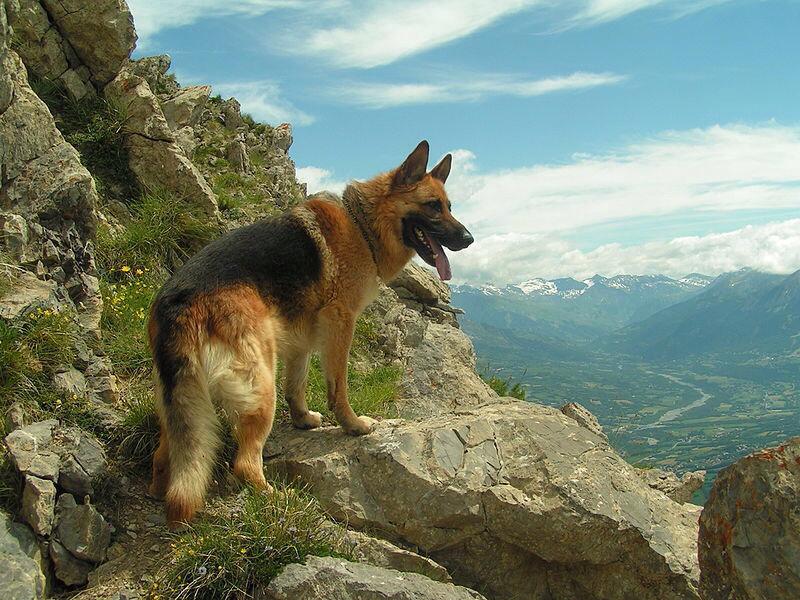 Farbe (Hund, Welpen, Fell