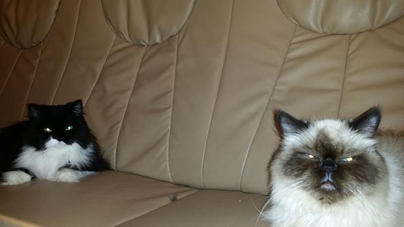 Die erwähnten Katzen... - (Haare, Hund, Katze)