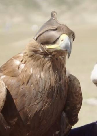 - (Tiere, Natur, Vögel)