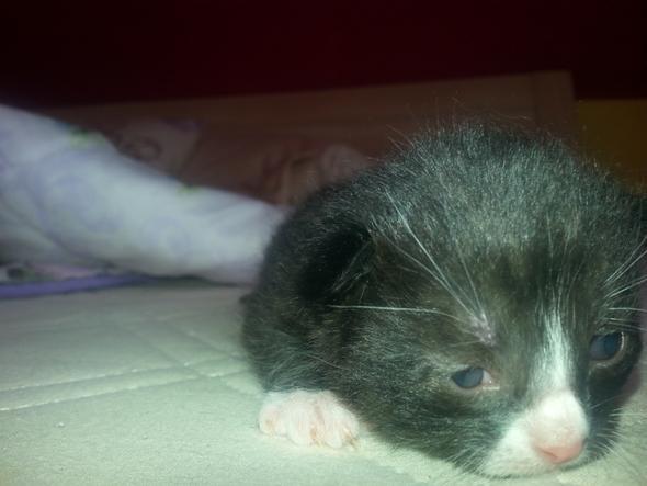 Meine Süße - (Tiere, Katzen, Kitten)