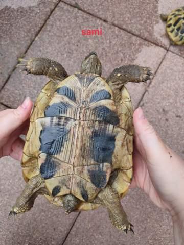 Schildkröten männchen oder weibchen?