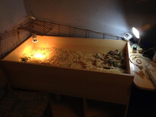 schildkr ten zusammen halten tiere haustiere. Black Bedroom Furniture Sets. Home Design Ideas