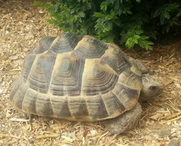 Kleiner Kühlschrank Für Schildkröten : Schildkrötenart? welche ist es? tiere rasse schildkröten