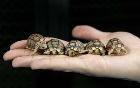 Die Schildkröte ganz links. :))  - (Tiere, Schildkröten)