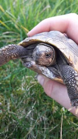 Schildkrötenpanzer geschimmelt, was tun?