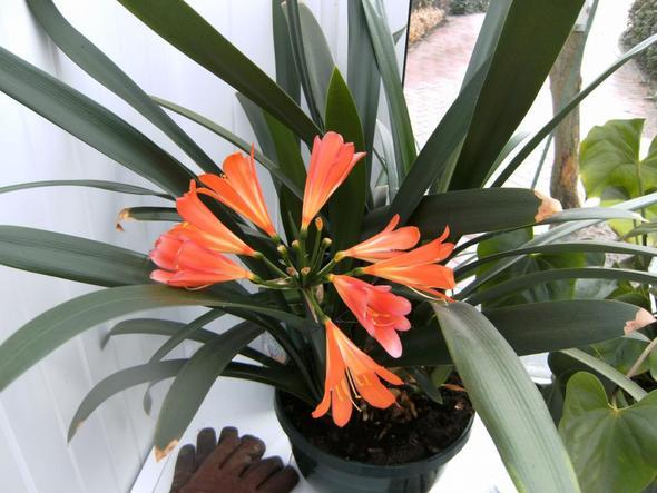 erste Blüte - (Biologie, wohnen)