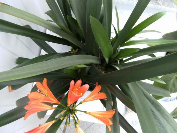 dritte Blüte - (Biologie, wohnen)