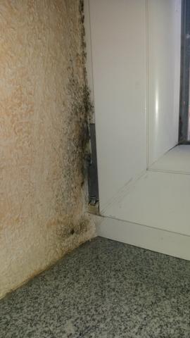 Schimmelbefall im Ankleidezimmer - (Schimmel, Fenster, Schlafzimmer)