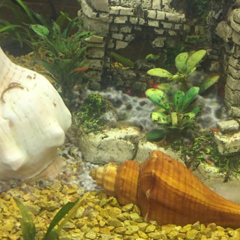 Wie rissen Spinnennetze.. - (Wasser, Fische, Aquarium)