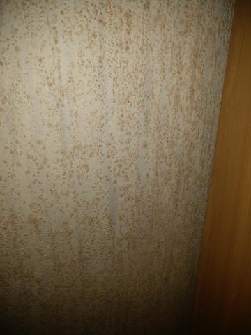 schimmel im schlafzimmer in ecke neben schrank pilze. Black Bedroom Furniture Sets. Home Design Ideas