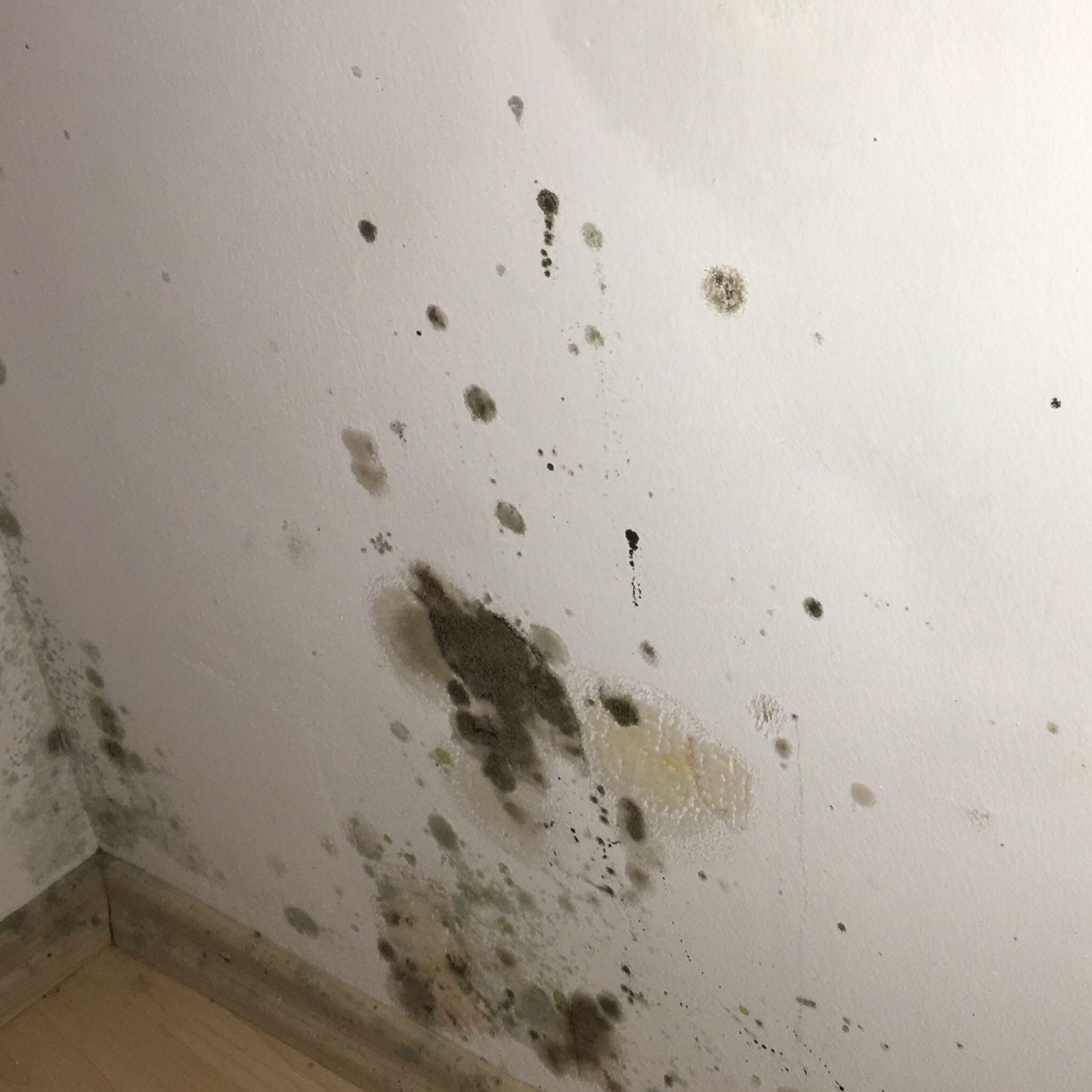 Schimmel In Wohnung Was Tun : schimmel in der wohnung bin ratlos was tun ~ Watch28wear.com Haus und Dekorationen