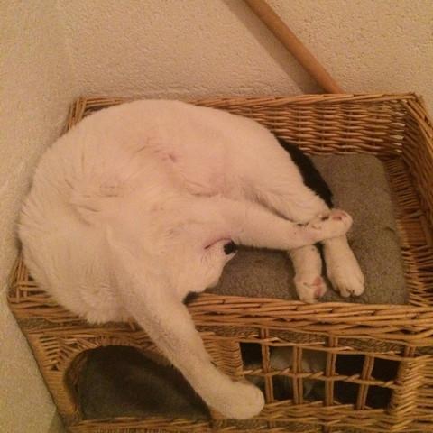 So schläft er immer 😂 - (Katze, schlafen)