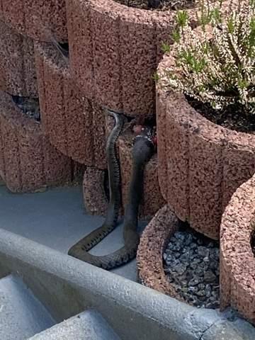 Schlange im Garten , was tun??