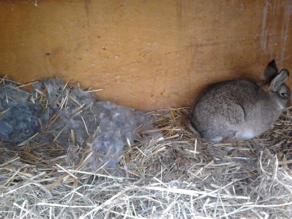 Drei Hasenbabys im Vierer mit einem Typen