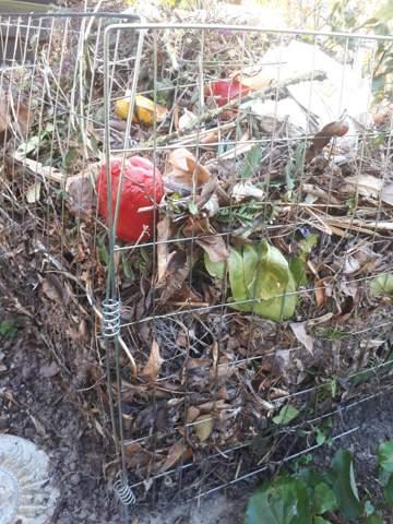 Schmeißt Ihr Obst- und Gemüsereste in den Kompost oder nur Gartenabfälle wegen der Ratten?