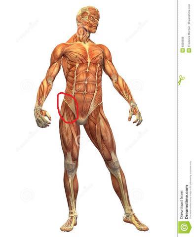 Bild - (Körper, Schmerzen, Arzt)
