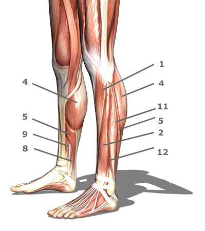 Schmerzen überhalb vom Knöchel bis zum Knie hoch. Was könnte das ...