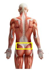 Bereich der Schmerzen - (Schmerzen, Gesäß, Unterer Rücken)