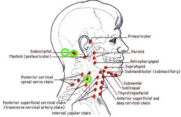 Harte beule am hinterkopf