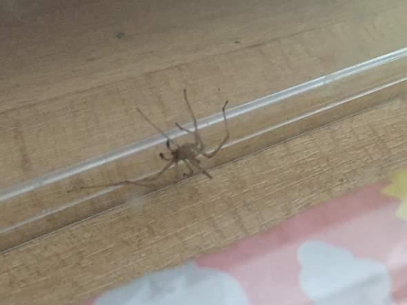 - (Tiere, Spinnen, Spinne)