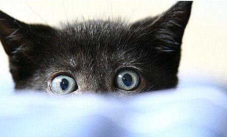 sch ne bilder von meiner katze machen katzen. Black Bedroom Furniture Sets. Home Design Ideas