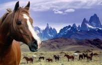 Pferde namen gesucht - (Pferde, Name, Namen)