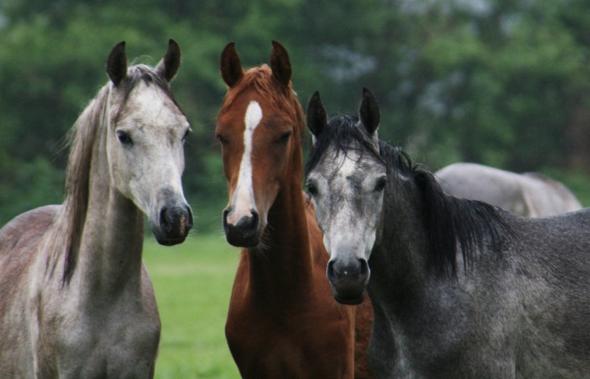 sch ne verr ckte pferdenamen f r stuten und hengste gesucht pferde name namen. Black Bedroom Furniture Sets. Home Design Ideas